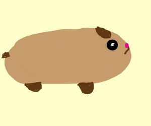 Wonder Hamster