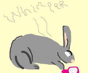 Tiny rabbit tentatively pets a hairbrush