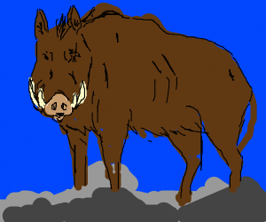 A boar missing one eye
