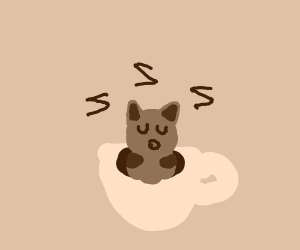 Sleeping coffee cat