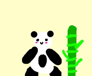 Panda next to bamboo