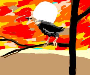 vulture burping