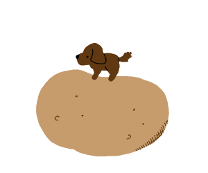small dog on a potato