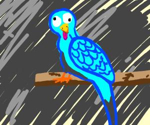Derpy blue bird