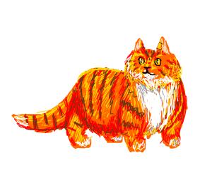 Orange tabby smiling wistfuly