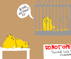 lab hamster worried about his buddies dying
