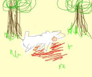A llama, murdered in the woods