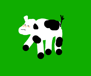 cow thinks about his decisions
