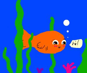 cute goldfish says hi :D