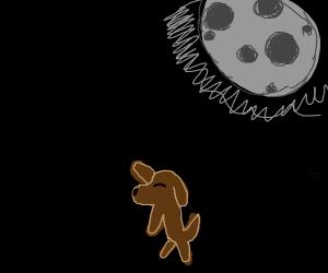Brown doggo dancing in the moonlight