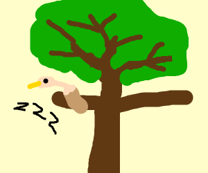 bald eagle sleeping on branch