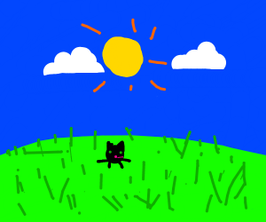 cat in a field