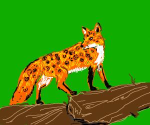 Leporad fox
