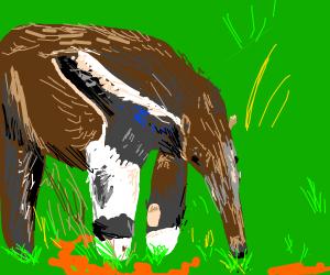 Anteater Exploring