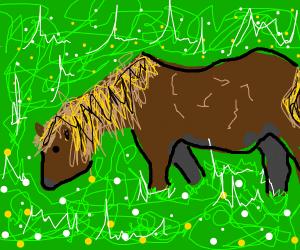 horse pony!
