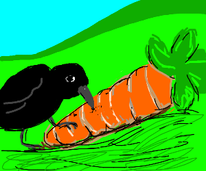 crow pecking a carrot