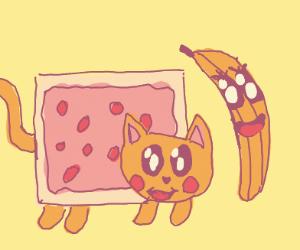 a cat next to a banana