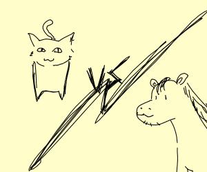 Cat vs Horse