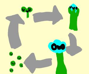 Cycle of UwU plant