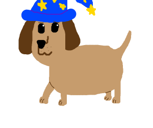 Puppy with a wizard hat