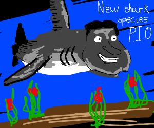 New shark species pio