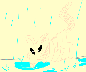 Hairless cat drinking puddle