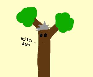 The great professor oak tree