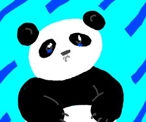 Panda sobbing