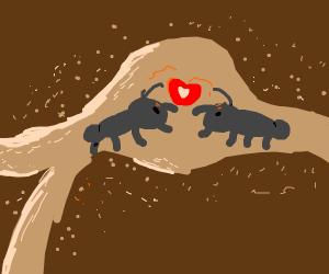 love ants