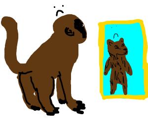 A depressed bear/monkey