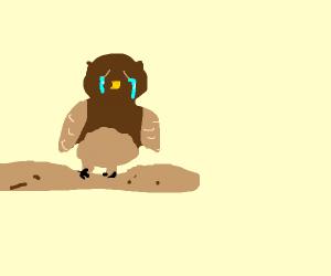 very very sad owl