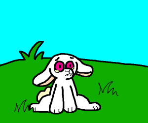Pink eyed rabbit in a field