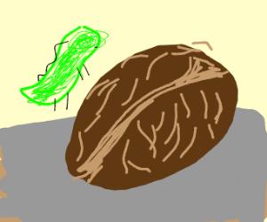 Prehistoric Walnut