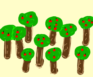 Many apple trees- an apple tree forest.
