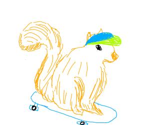 Skater Squirrel