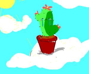 Sad cactus plant in the sky