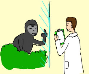 Gorilla flips off scientist