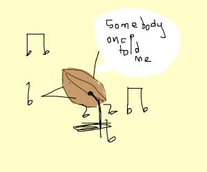 walnut singing