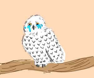 crying owl