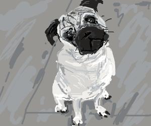 A miserable pug