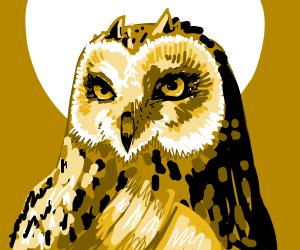 An owl.