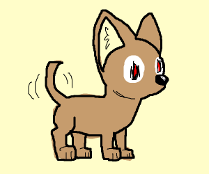 Chihuahua with unknown intentions