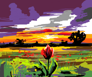 Red Rose In The Sunset