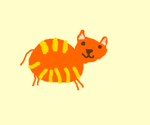 Fat orange kitty