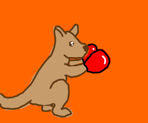Kangaroo with boxing gloves