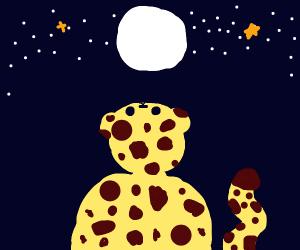 Cheetah looking at the night sky