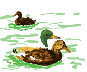 3x Ducks