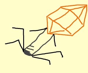 A bacteriophage
