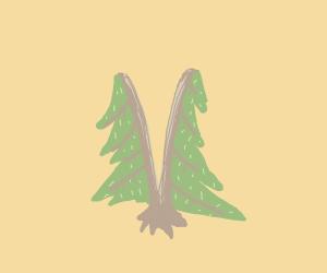 pine tree cut in half