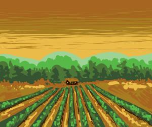 A sunset at a farm